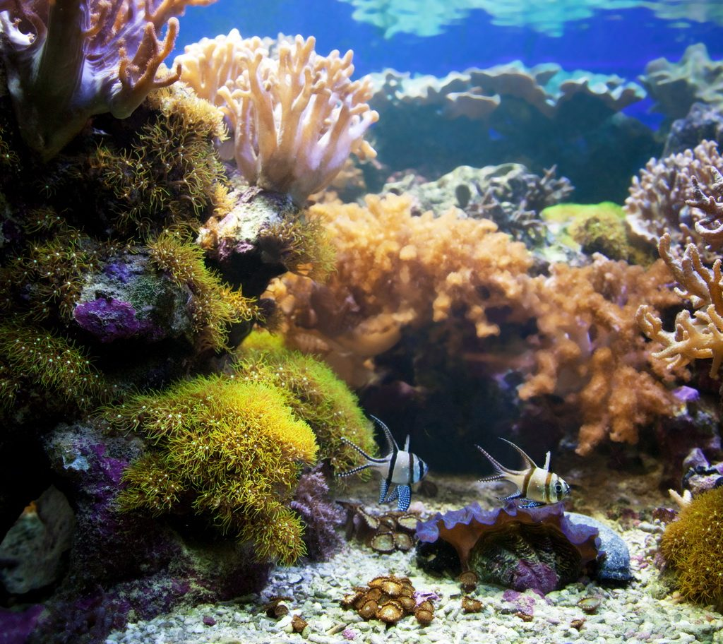 Underwater life. Coral reef, fish, colorful plants in ocean